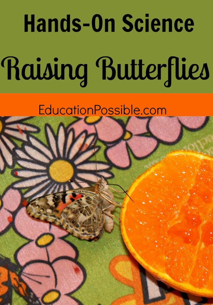Hands-On Science: Raising Butterflies Education Possible
