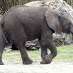 Meet African Animals at Disney's Animal Kingdom