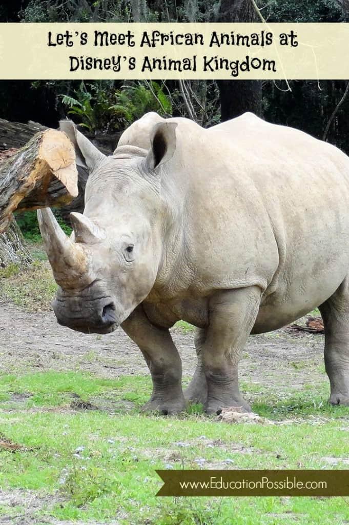 Meet African Animals at DAK - EducationPossible.com
