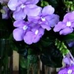 Five Reasons to Visit Bok Tower Gardens