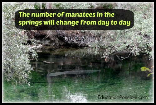Meet the Manatees at Blue Springs State Park