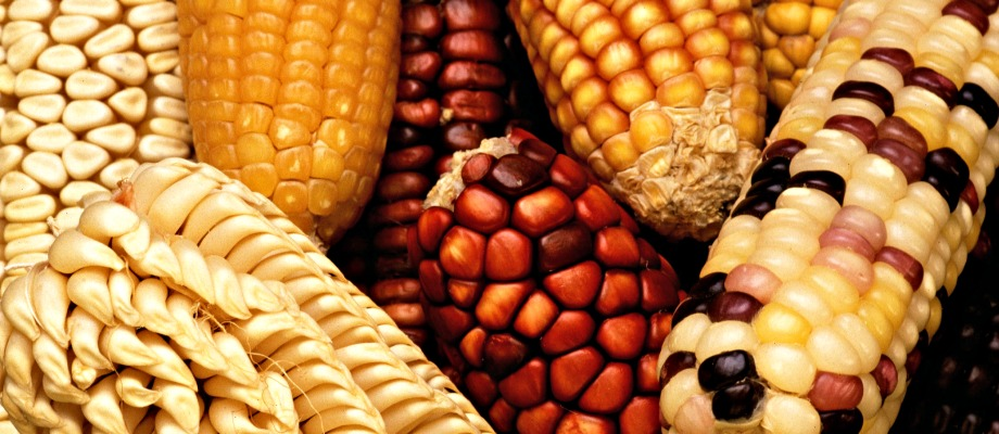 Historical Cooking: Native American Corn Recipes