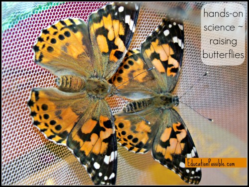 hands on science raising butterflies Education Possible