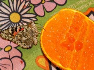 raising butterflies hands-on science FREE download