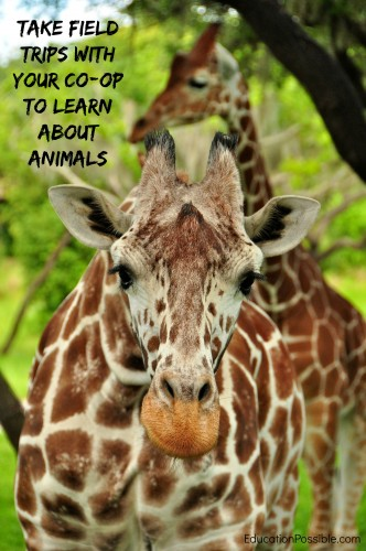 take field trips with your co-op to learn about animals Education Possible