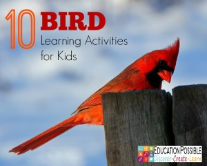 10 Bird Learning Activities for Kids - Education Possible