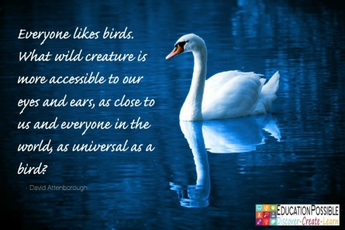 Bird Learning Activities for Kids - Education Possible