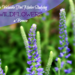 This Valuable Tool Makes Studying Wildflowers a Breeze