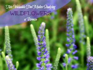 This Valuable Tool Makes Studying Wildflowers a Breeze featured